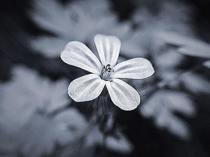 EyeEm Selects Close-up Flower