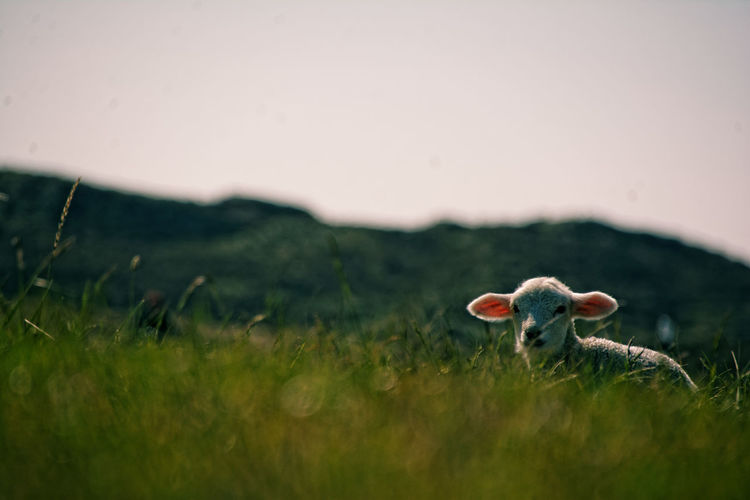 Close-Up Of Mushrooms On Field Against Clear Sky