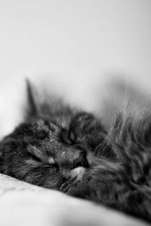 Animal Animal Themes Black And White Cat Close-up Cozy Domestic Domestic Animals Domestic Cat Eyes Closed  Feline House Cat Indoors  Lying Down Mammal Napping No People One Animal Pets Relaxation Resting Selective Focus Sleeping Vertebrate Whisker