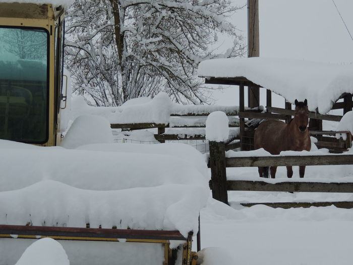 White horse cart in snow
