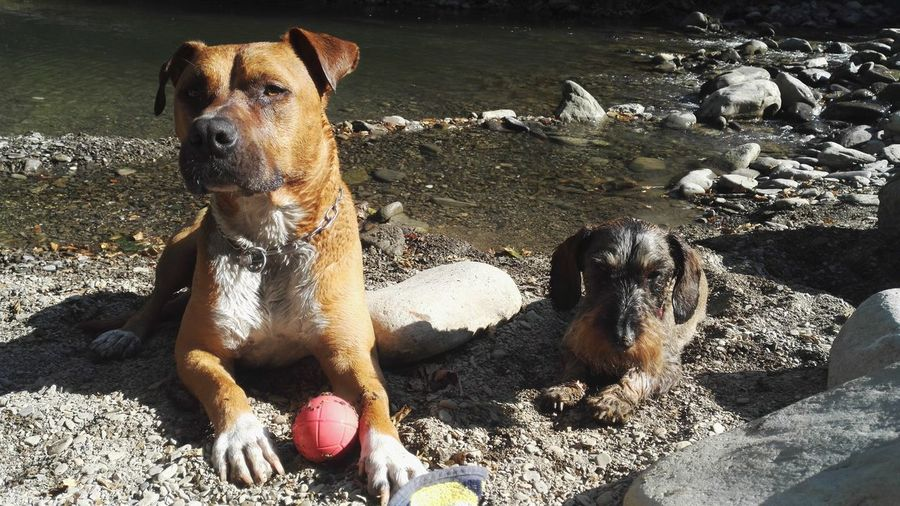 Tuscany Dogs Nature River Relax Relaxing Moments