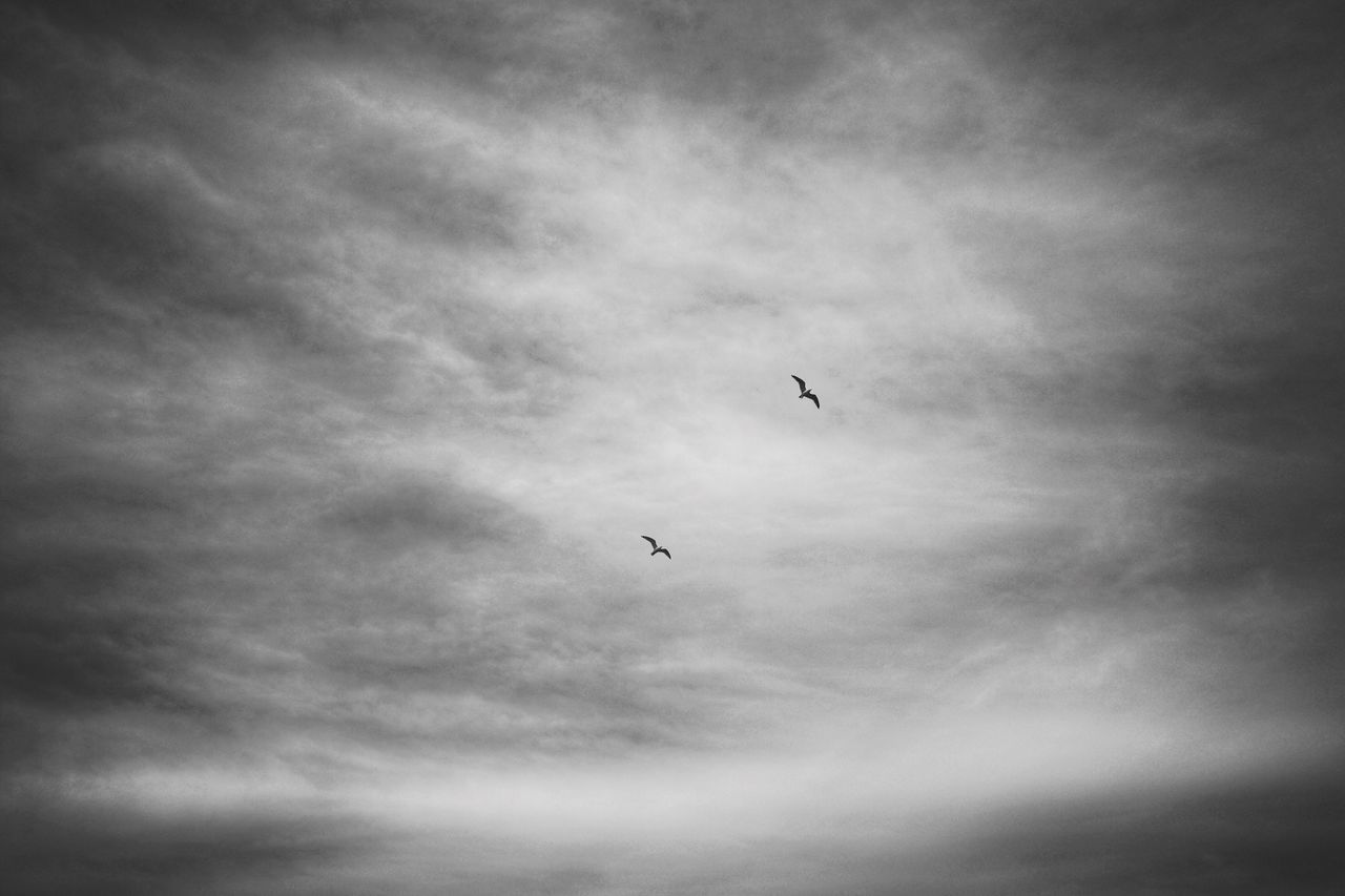 flying, bird, animal themes, animals in the wild, mid-air, sky, low angle view, one animal, cloud - sky, no people, spread wings, outdoors, day, nature, beauty in nature