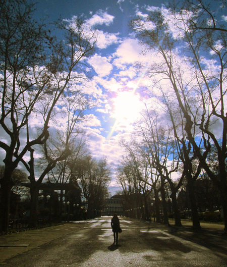 Arvore CeuAzul Bare Tree Branch Day Full Length Growth Leisure Activity Luz Men Modelo Nature One Man Only One Person Outdoors Parque  People Real People Rear View Road Silhouette Sky Sunlight Tree Walking