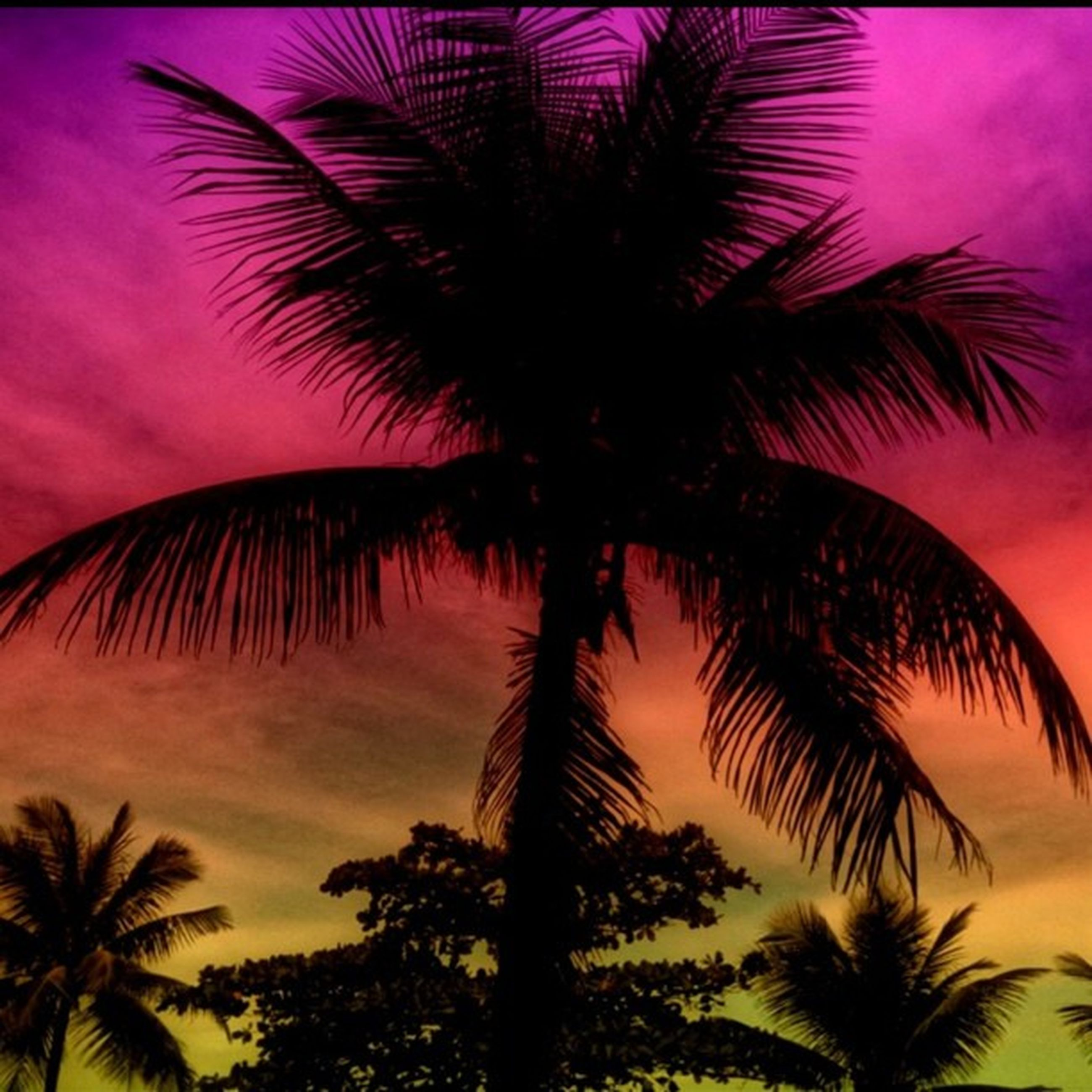 palm tree, low angle view, tree, sky, sunset, silhouette, growth, beauty in nature, nature, tranquility, scenics, cloud - sky, palm leaf, outdoors, no people, tranquil scene, coconut palm tree, palm frond, dusk, orange color