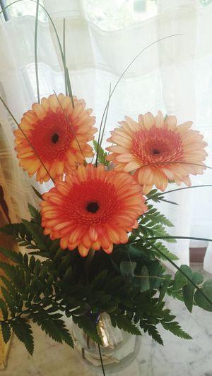 Blume🌸 Flower Nature Orange Color Blumenpracht🌺🍃