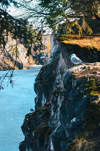 View of bird on rock amidst trees