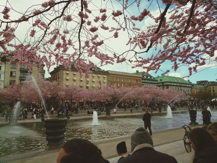 Tree Water Large Group Of People Day Nature Sky Real People Built Structure Building Exterior Outdoors Architecture Beauty In Nature Women Fragility Men People City Life Street Photography Flower Sweden Stockholm Cherry Blossoms Cherry Tree Adult Garden
