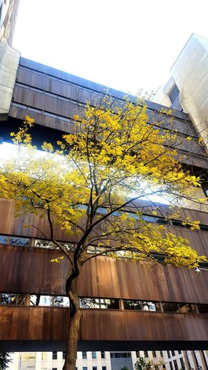 golden Downtown Toronto The 6ix Canada Life Building Gold Tree Fall Colours Bridges Tree Sky Close-up Architecture