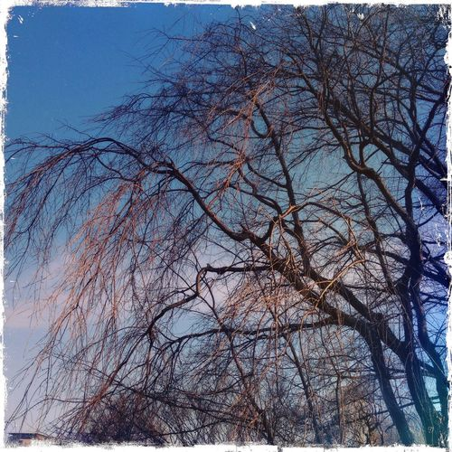 Hipstamatic Sky And Trees For The Love Of Trees ~ EyeEm Nature Lover