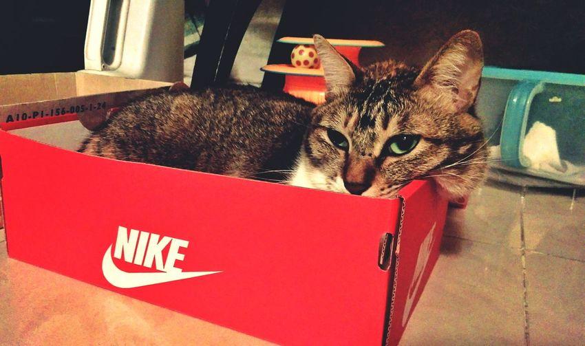 Cute Pets Kitty Cat Cat Lovers Cat♡