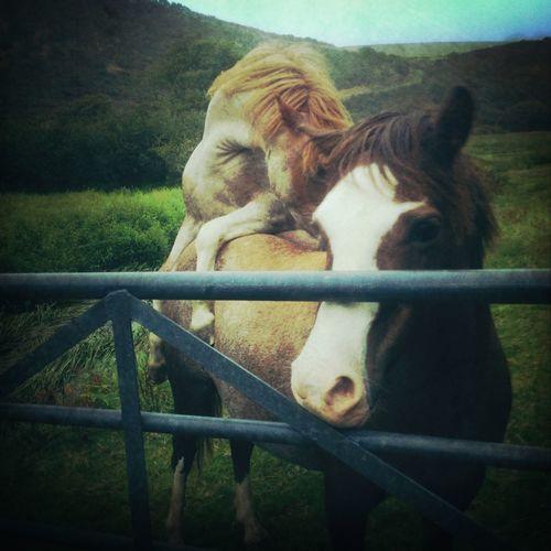 Taking Photos Horses Hello World Likeforlike