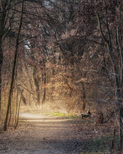 Full Frame Backgrounds No People Outdoors Day Nature Weiterstadt Road Wood Landscape Grafenhausen Nikon D40 Darmstadt Tree Golden Hour Gold Sunset Brown Yellow Light Park Forest Bench Color