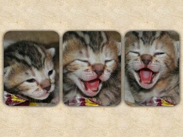 Babycat ❤ Cat Lovers Cat♡ Omgsocute