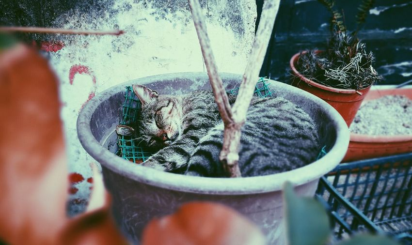 High angle view of tabby cat sleeping in potted plant
