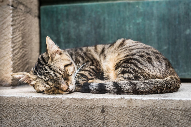 Animal Animal Themes Cat Close-up Day Domestic Domestic Animals Domestic Cat Eyes Closed  Feline Focus On Foreground Lying Down Mammal No People One Animal Pets Relaxation Resting Sleeping Tabby Vertebrate Whisker