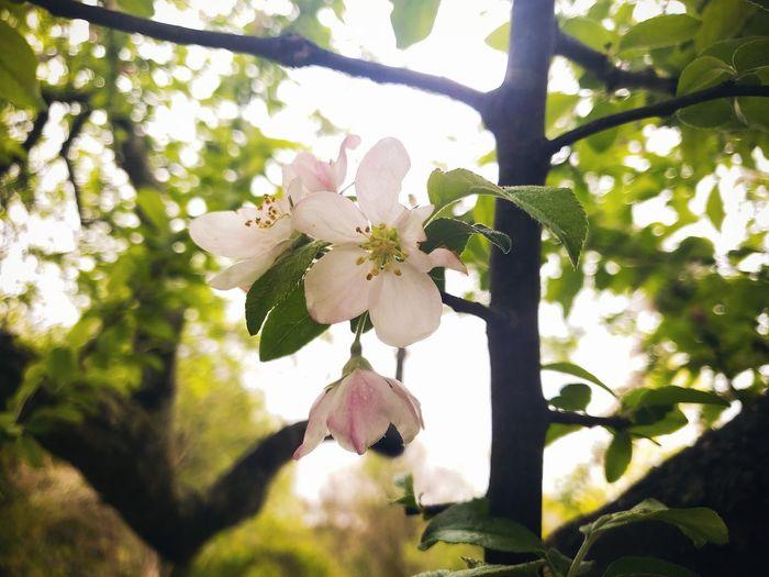Tree Flower