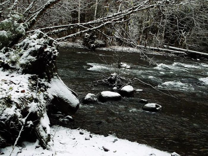 Abundance Beauty In Nature Cold Temperature Day Flowing Flowing Water Forest Large Group Of Objects Nature Non-urban Scene Outdoors River Rock Scenics Snow Stone Stream Tranquil Scene Tranquility Water Winter WoodLand