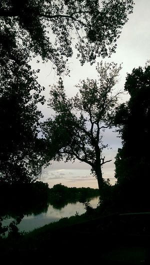 River View Water_collection River Side Ide Adobe State Park Norcal Nature_collection Landscape_Collection Silhouette No Filter Sacramento River
