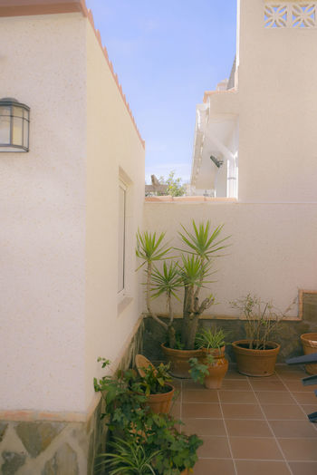 Potted plants outside building