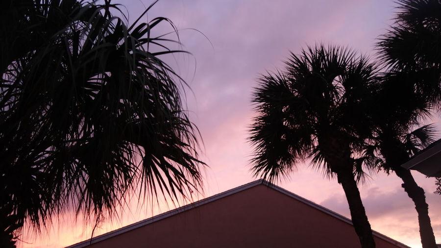 Tropical Sky At