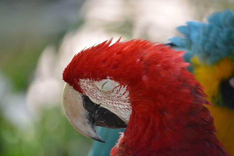 Close-up of macaws outdoors