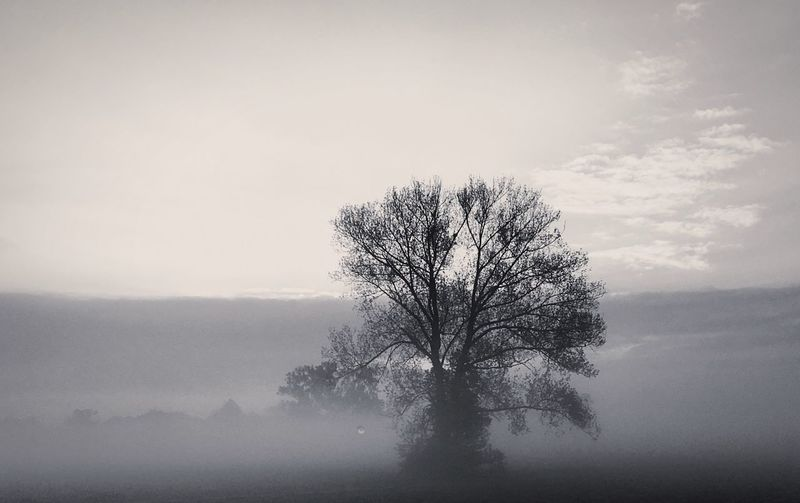 Tree Lone