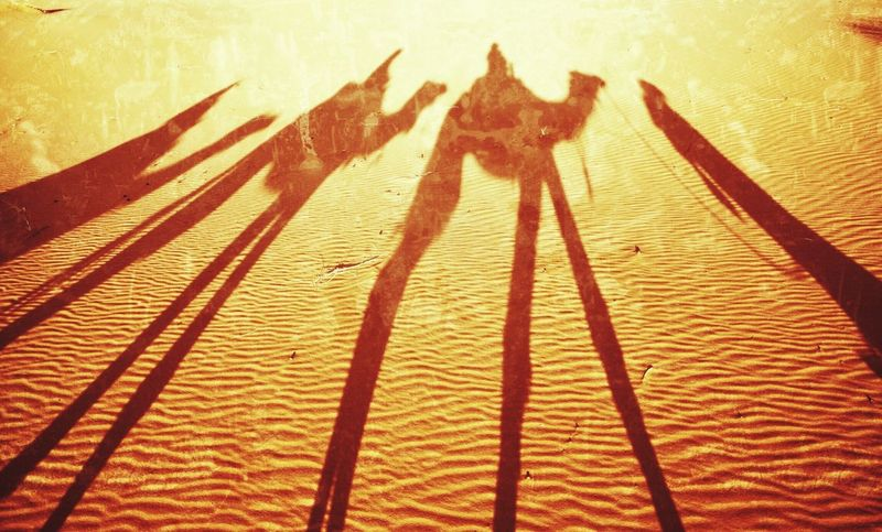 Such a hard way to go! Traveling Nature Desert Morning Travelling On The Road Travel Enjoying Life Photography Camel Trek Road Africa Popular Things I Like Travel Photography Hello World Popular Photos Nature_collection Lifestyles Morrocco Travel Destinations Cross The Desert Sahara Shadows & Lights