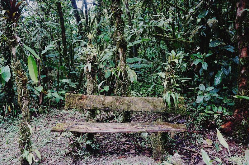 Breathing Space EyeEmNewHere El Valle De Antón Panamaoutdoors Rainforest Walks Rainforestretreat Forest Photography