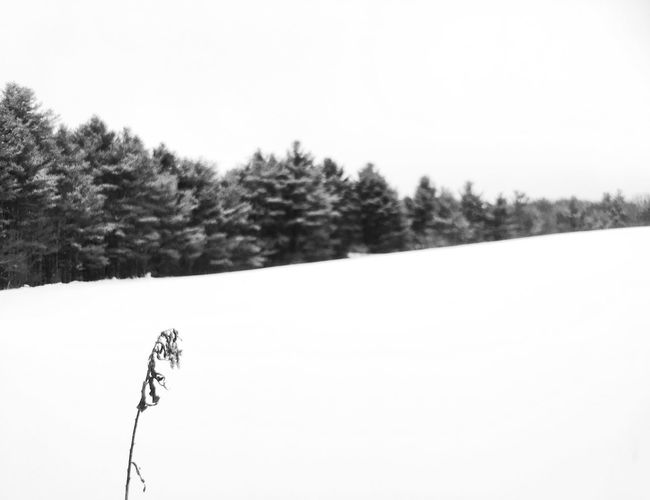 Trees on snow field against clear sky