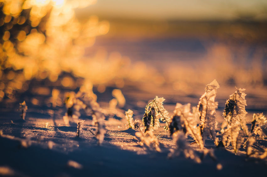 Fragile ice crystals in early morning sunlight... Sunset Bokeh Photography Ice Crystals Frozen Nature Nature Winter Nature Photography Winter Wonderland Bokeh Love Frozen Photography Snow ❄ Klaquax@home