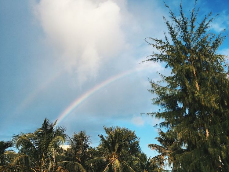 Saipan Cnmi Northern Mariana Islands Vscocam VSCO IPhoneography Beachphotography Beach Palm Tree Tree Plant Rainbow Sky Beauty In Nature Low Angle View Cloud - Sky No People Nature Scenics - Nature Tranquility Outdoors