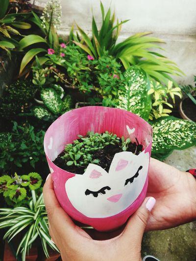 Having Fun Plants 🌱 Plant Growing Plants Green Green Green!  Green Vibes Green Nature Macetero Make By Me I Love It ❤