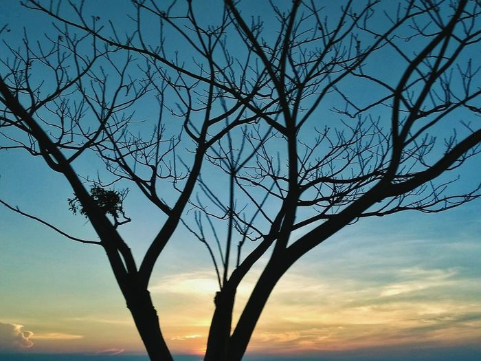 Sunset Tree Nature Beauty In Nature Sky Tranquility Silhouette Scenics Landscape Blue Outdoors Travel Destinations No People Sea Beach Rural Scene Day