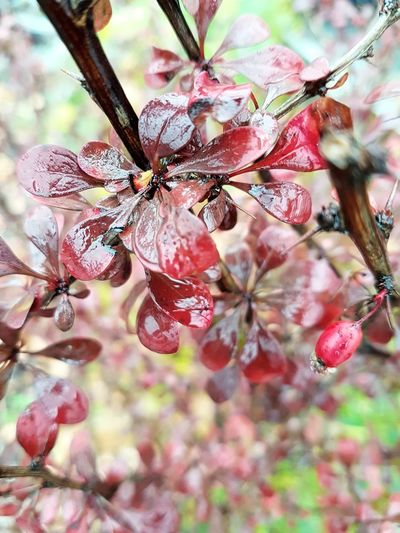 The unsung beauties by the wayside Fall Collection Fall Colors Rainy Autumn Day Cellphone Photography Autumn Colours In The Rain Wet Plants Autumn Collection Bush Branch Close-up Plant