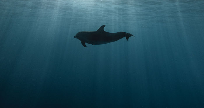 VIEW OF A SILHOUETTE UNDERWATER