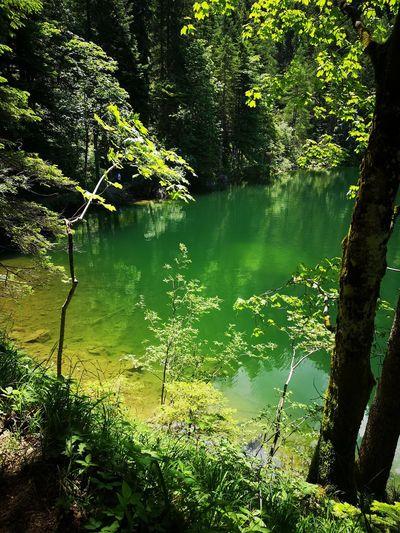 lake green Tree Water Lake Reflection Greenery Green