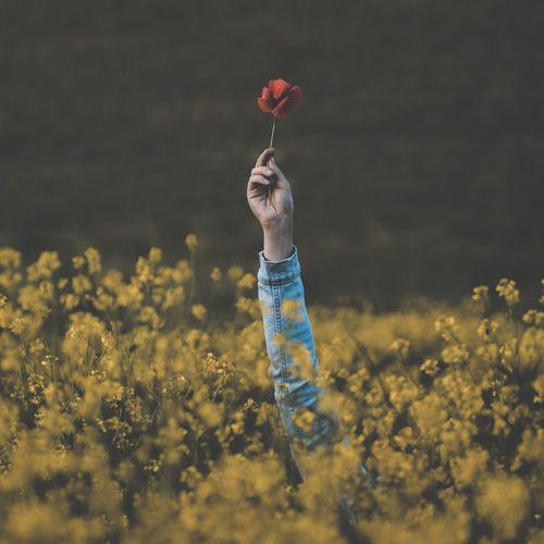 Full length of girl holding yellow flower on field