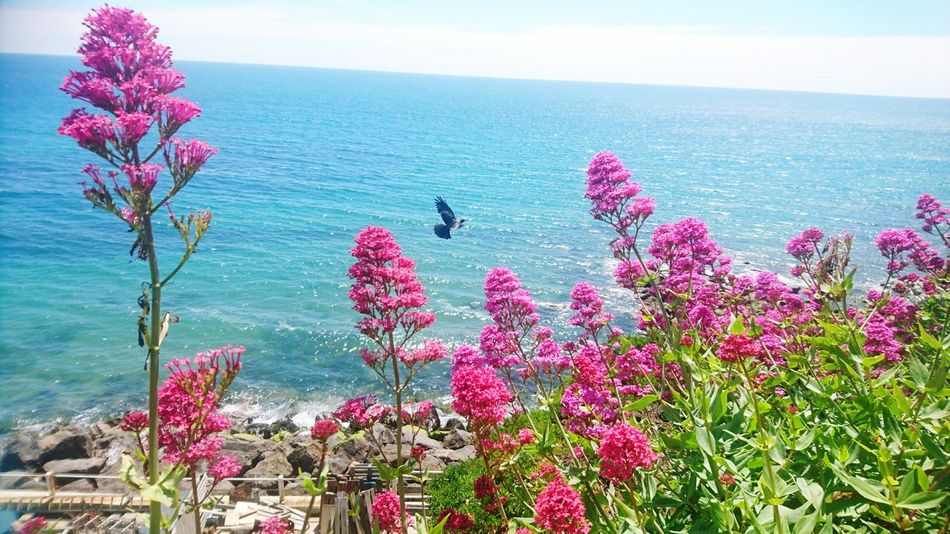 Bird Photography Beach Beauty In Nature Tranquility Water Nature Beach Photography Pink Flowers Sky And Sea Tranquility Tranquil Scene Birdwatching Bird Watching Live For The Story