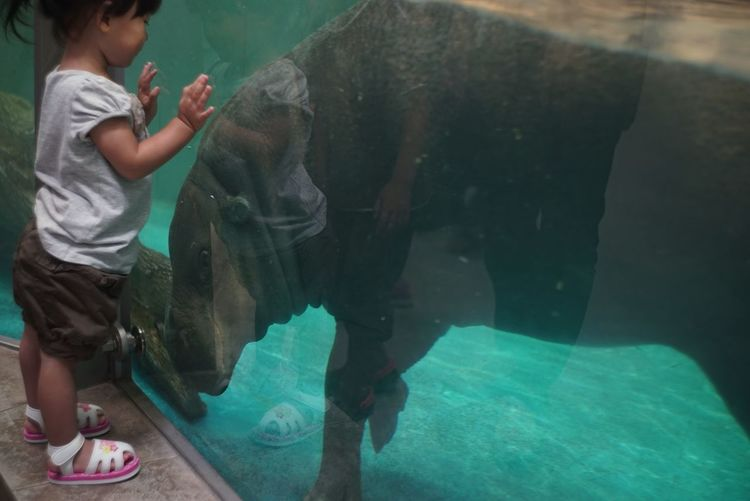 カバさん 子供 Hippopotamus Child Experience People Watching Capture The Moment From My Point Of View Reflection Animal And People People And Places EyeEm Nature Lover Zoo Photography  Taking Photos NIFREL OSAKA