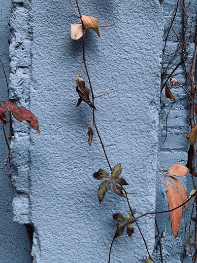 Close-up of dry leaves on wall