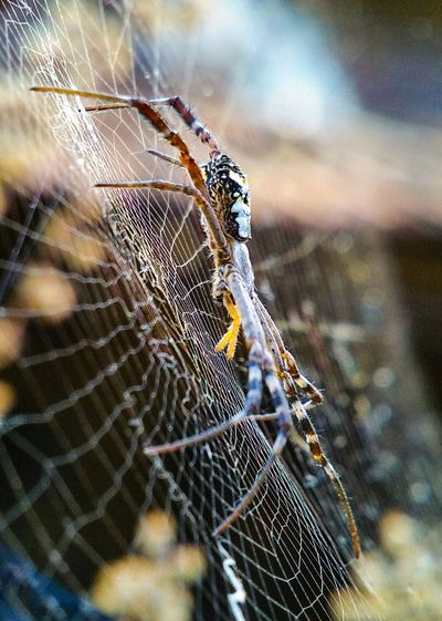 signature spider Colourful Spider Web Wild Spider Trapped Web Spider Web Insect Spider Close-up