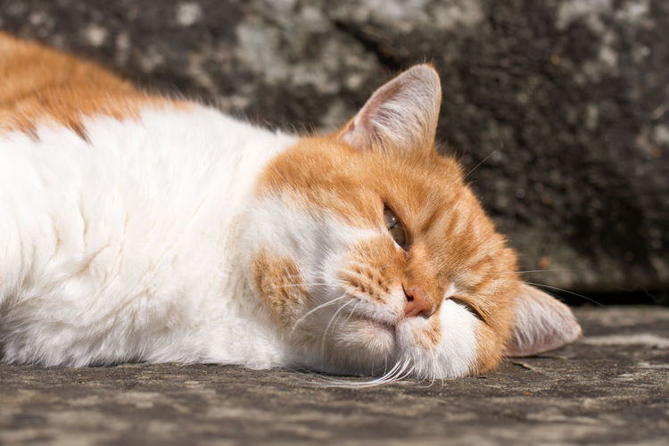Cat Animal Themes Close-up Day Domestic Animals Domestic Cat Feline Mammal Nature No People One Animal Outdoors Pets
