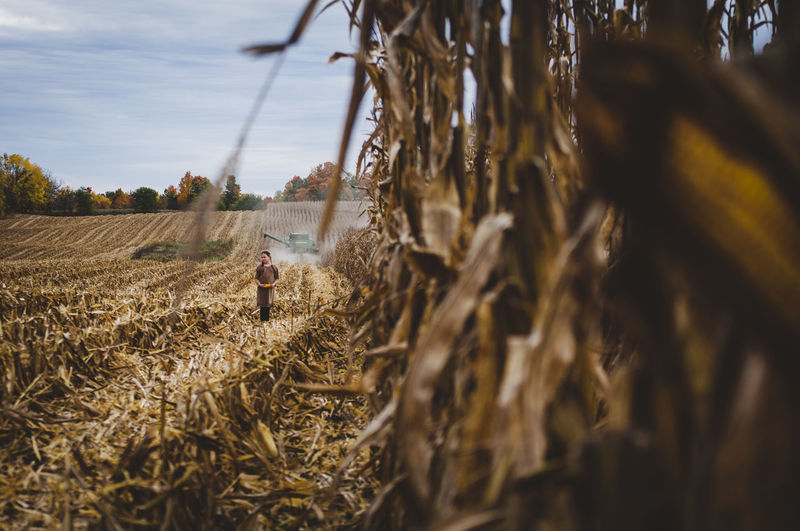 Agriculture Field Plant Land Farm Cereal Plant Crop  Rural Scene Landscape Sky Nature One Person Growth Environment Day Wheat Real People Tree Farmer Selective Focus Outdoors