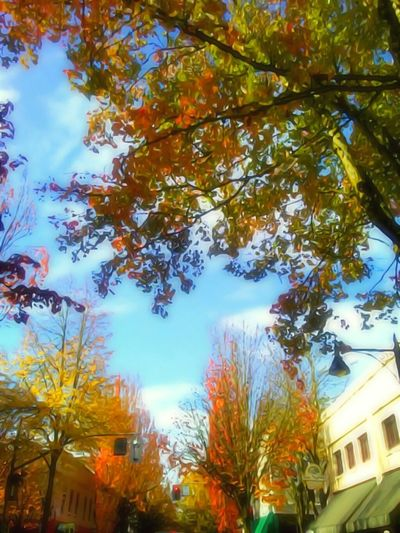 Tree Autumn Beauty In Nature No People Change Scenics Leaf Low Angle View Growth Outdoors Cloud - Sky Horizontal Historic Downtown Harvest Time Cold Temperature Small Town America Fall Colors October Afternoon Capturing Motion Essence Of Fall Vibrant Color Tranquility EyeEm Photo Of The Day Outdoors Photograpghy  The Week On EyeEem