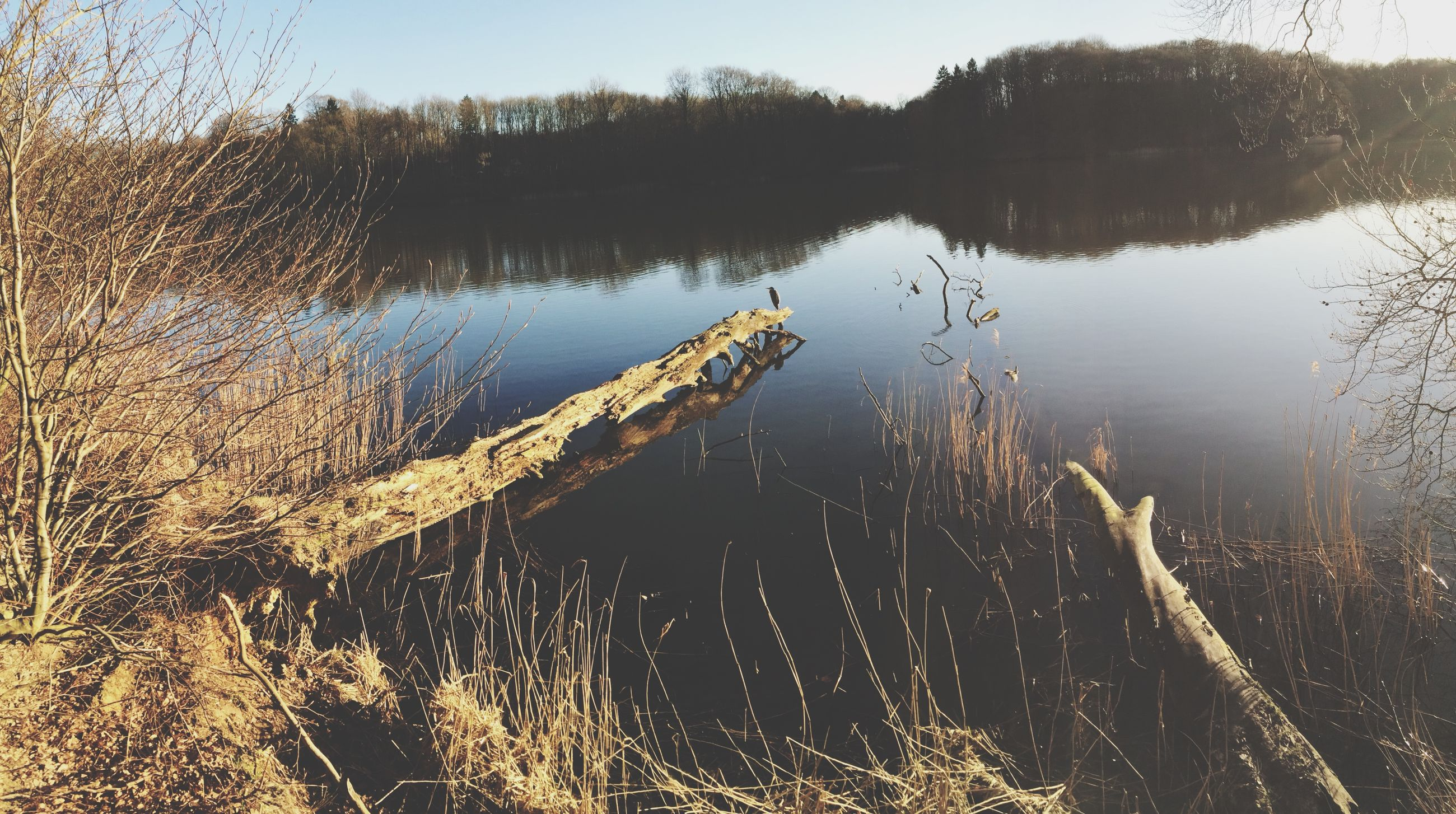 water, lake, reflection, tranquility, nature, tranquil scene, beauty in nature, tree, scenics, grass, lakeshore, plant, outdoors, standing water, river, no people, forest, growth, sky, day