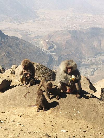 Close-Up Of Monkeys Sitting On Mountain