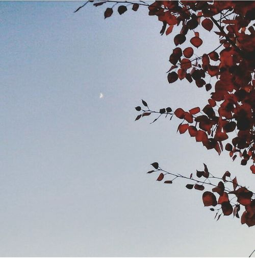Went outside,and saw the moon and it made me think of you First Eyeem Photo