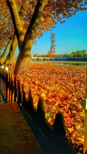 Beautiful Trip Happy Scenery People Photography Holiday Autumn Colors Trees Bridge Leaves Sea Streetphotography