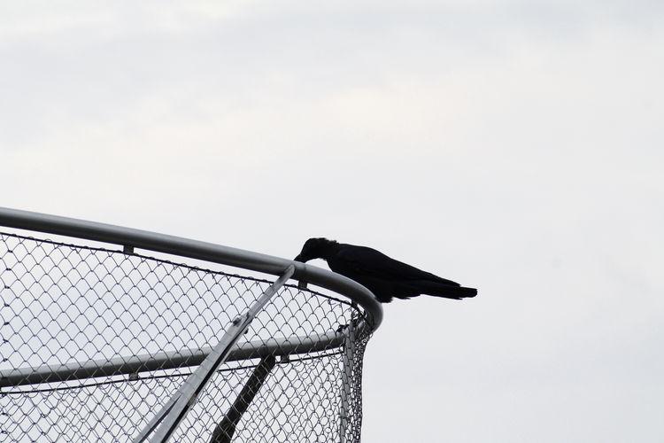 Bird On Fence Against Sky