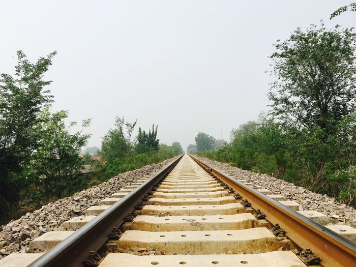 Surface level of railway tracks along plants